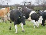 Перспективы фермерства на будущее