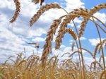 О поддержке фермеров со стороны государства