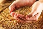 Добиться снижения цен на зерно не удастся