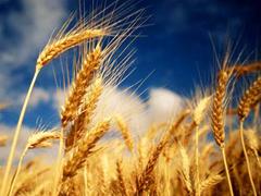 Почему не получается «спеть» аграрно-страховой романс